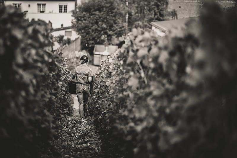 galerie-champagne-dumenil-1er-cru-331