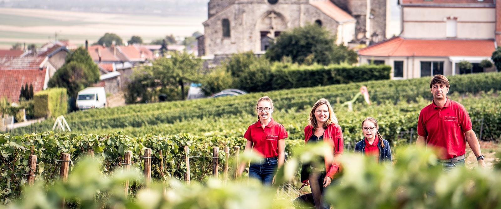 Le vignoble de Chigny-Les-Roses